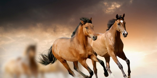 Wild Horse Wallpapers