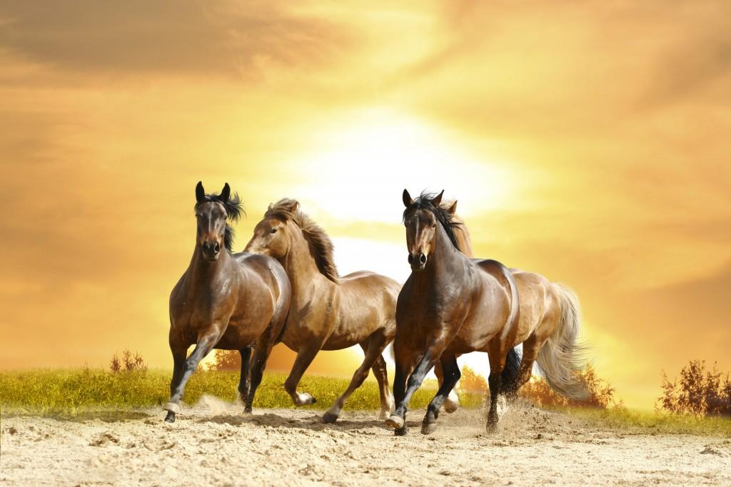 Wild Horse Wallpaper 7008x4672
