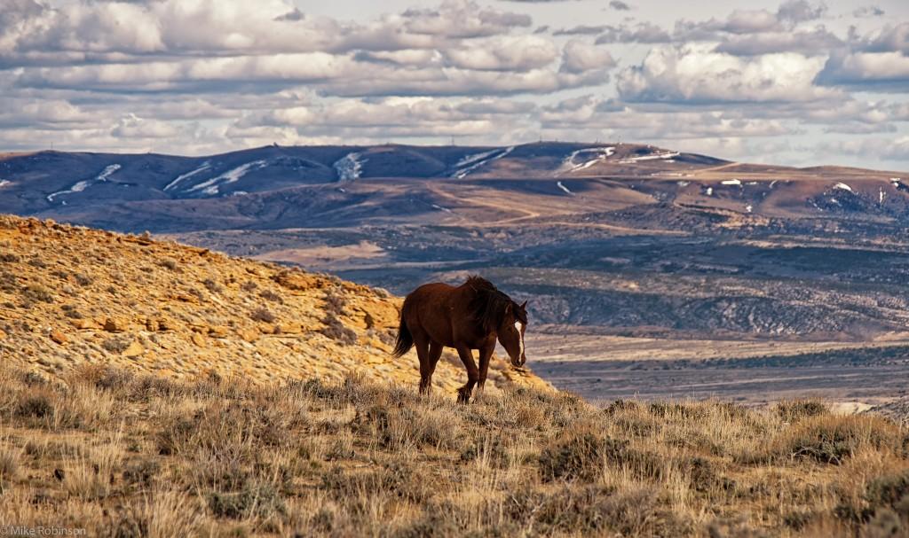 Wild Horse Wallpaper 2048x1214