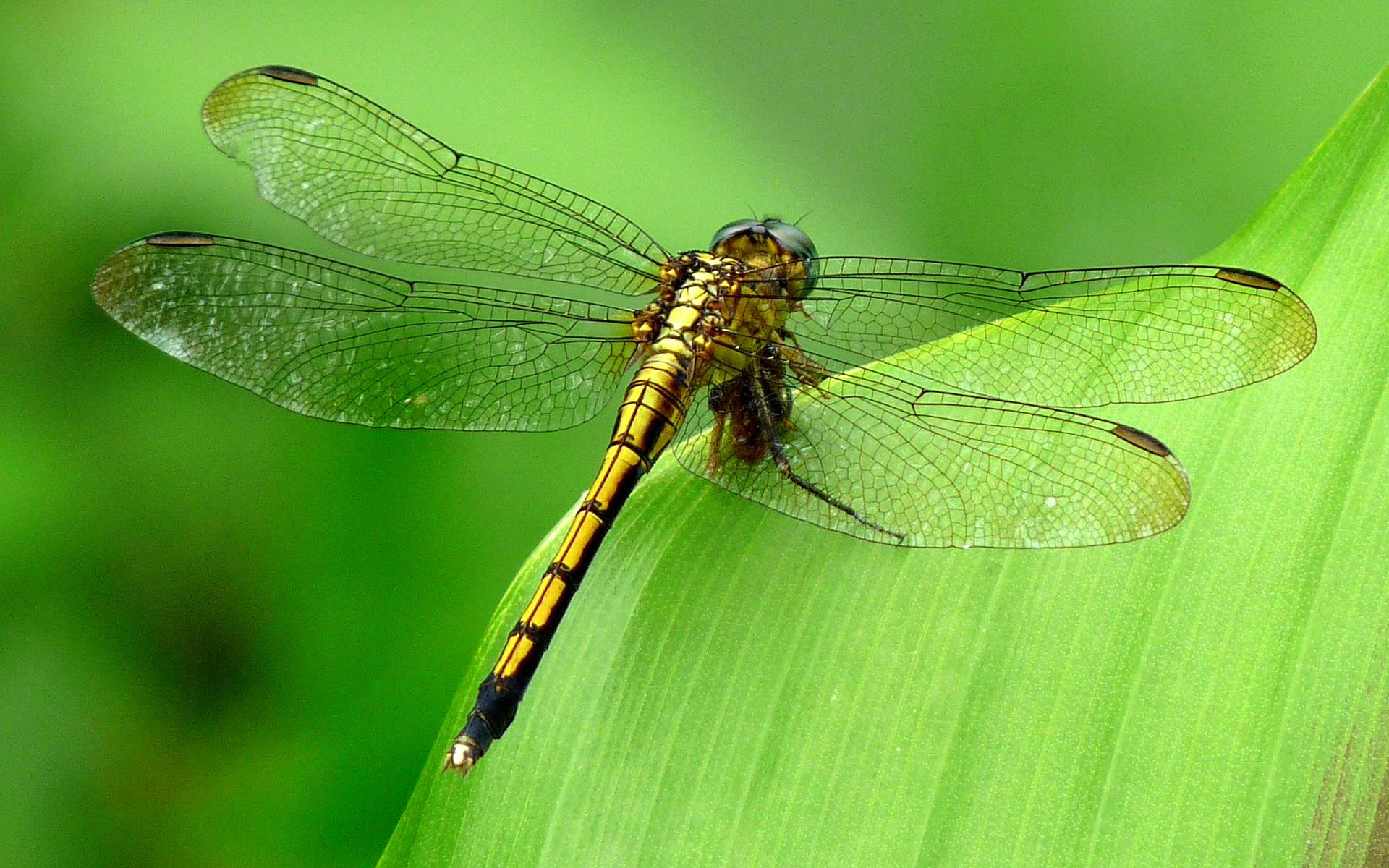 A romantic Red Dragonfly highdefinition photography wallpaper