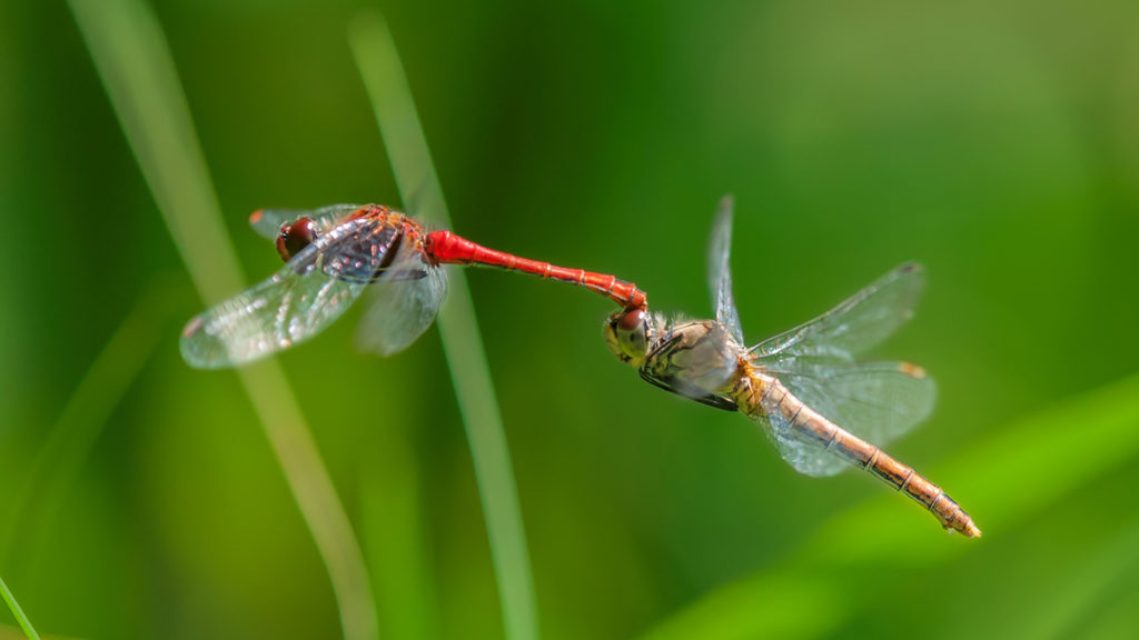 Dragonfly Full HD Wallpaper
