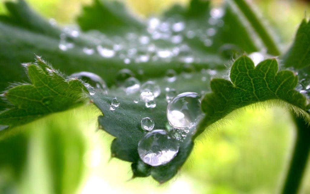 Water Drop Widescreen Wallpaper