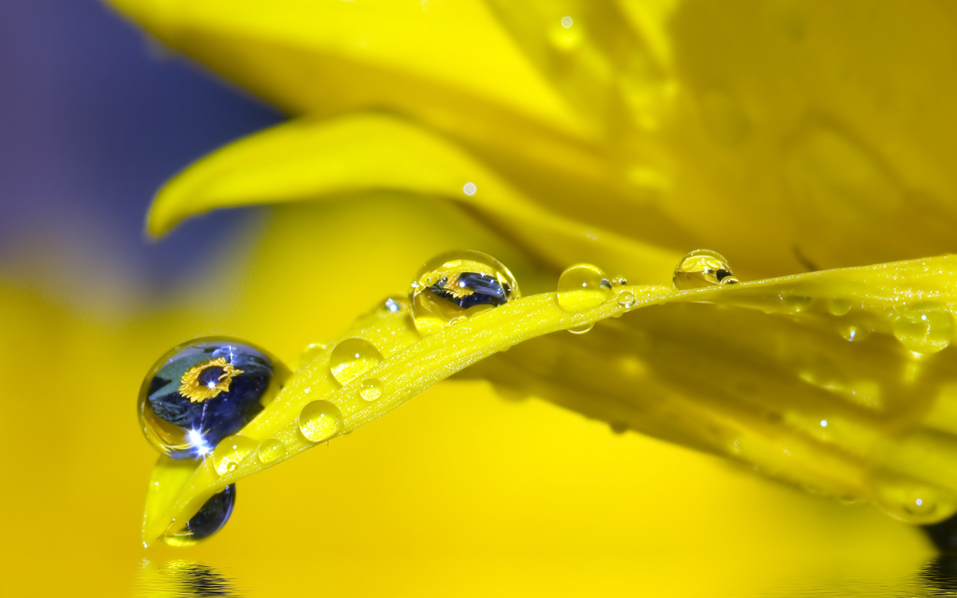 Water Drop Widescreen Wallpaper
