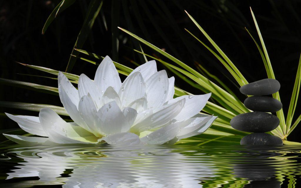 Zen Widescreen Wallpaper