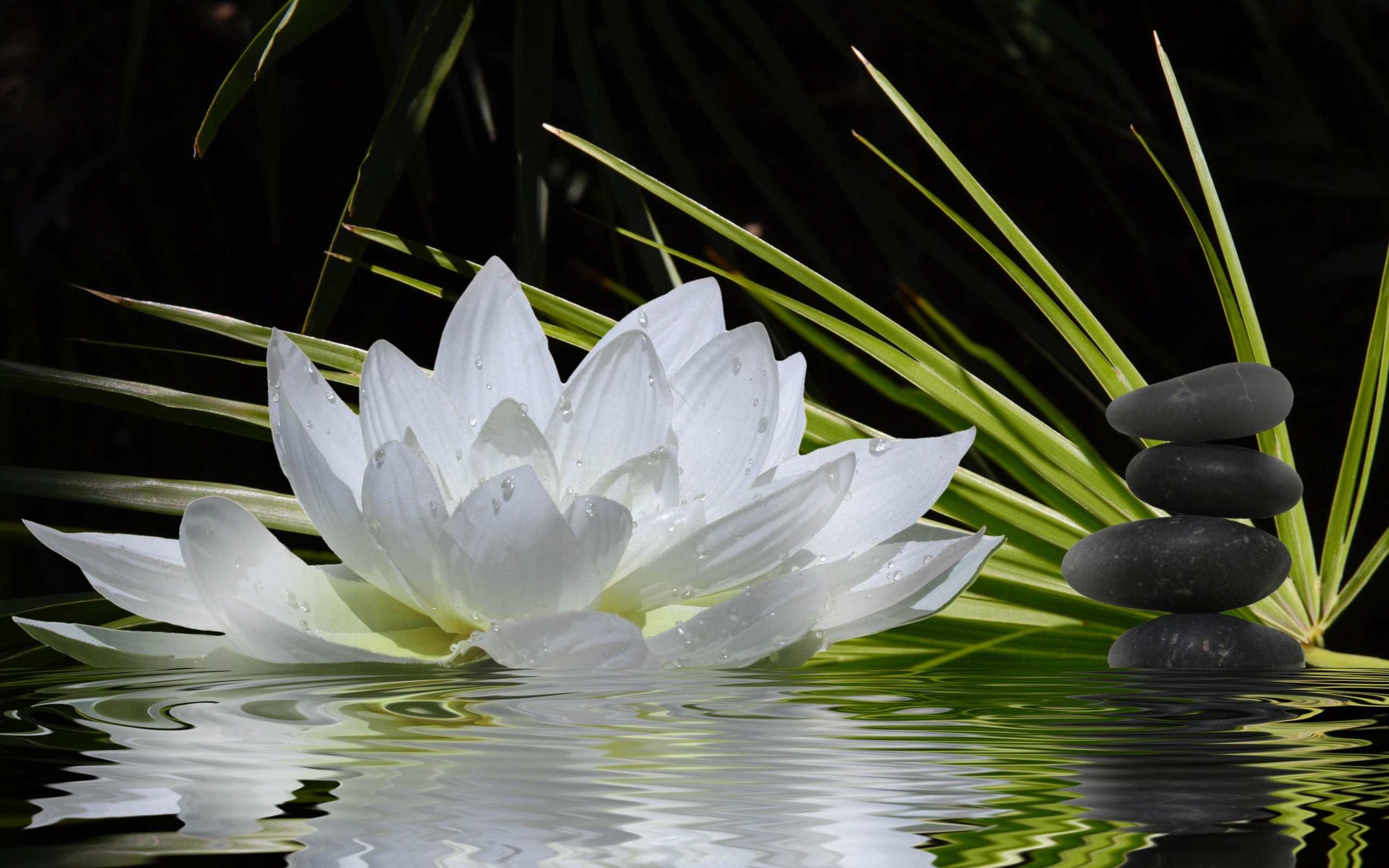 Zen wallpapers pictures images - Image zen nature ...
