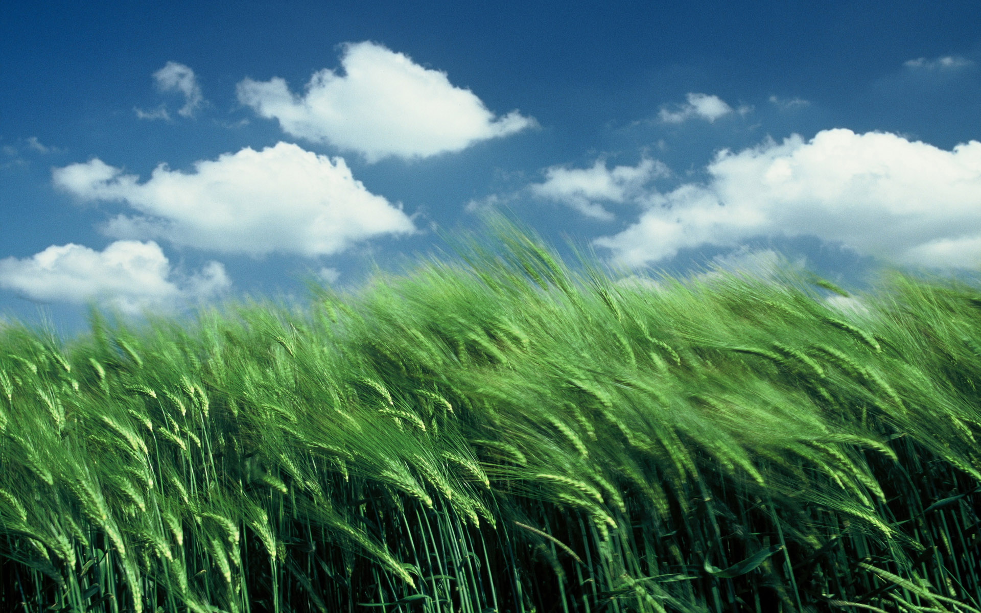 Cornfield Wallpapers, Pictures, Images