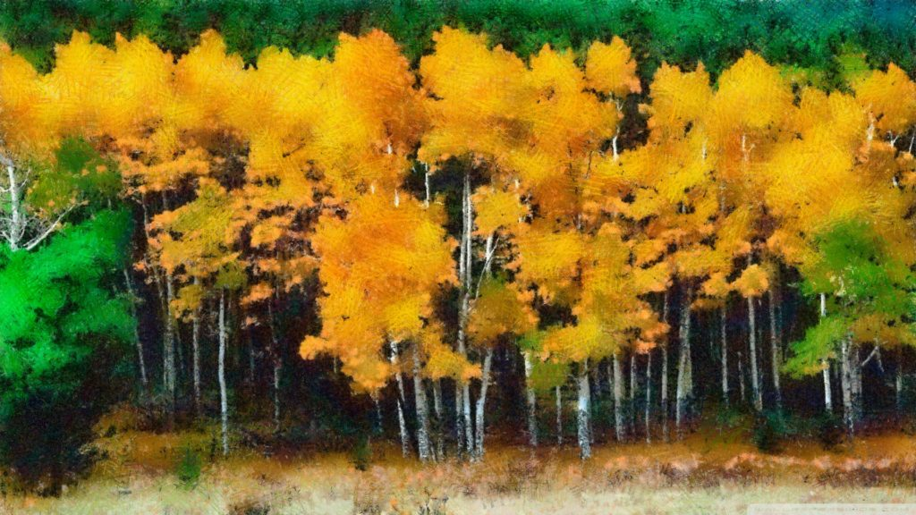 Fall Full HD Wallpaper