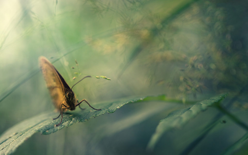 Moth Widescreen Wallpaper
