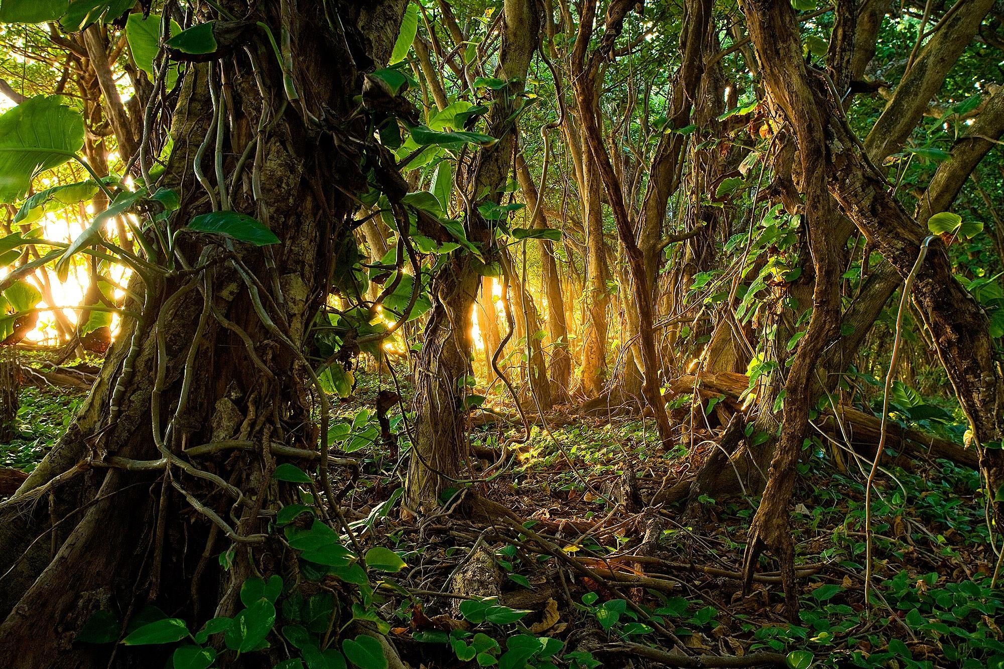 Fondo De Pantalla Selva: Jungle Wallpapers, Pictures, Images
