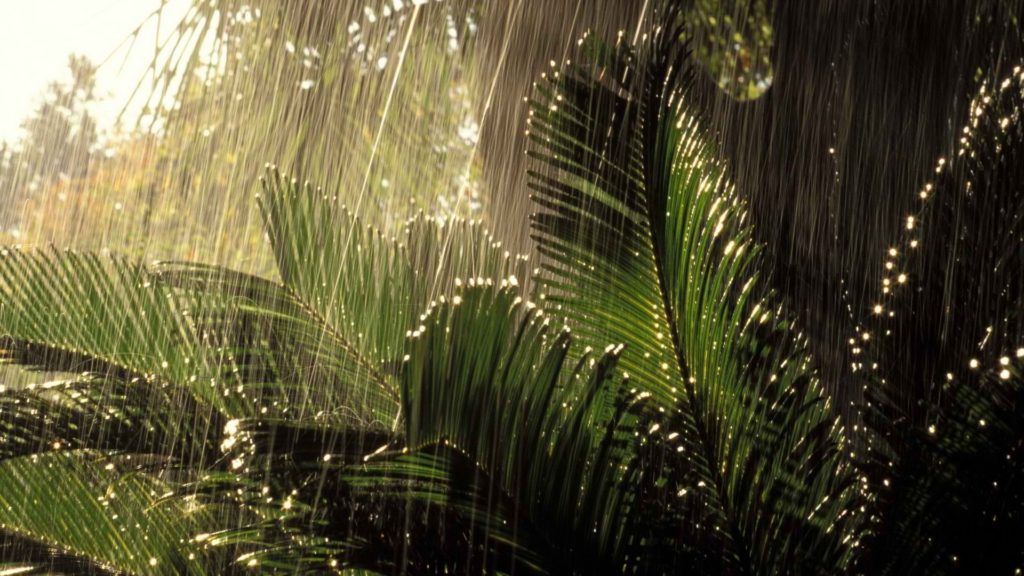 Jungle Full HD Wallpaper