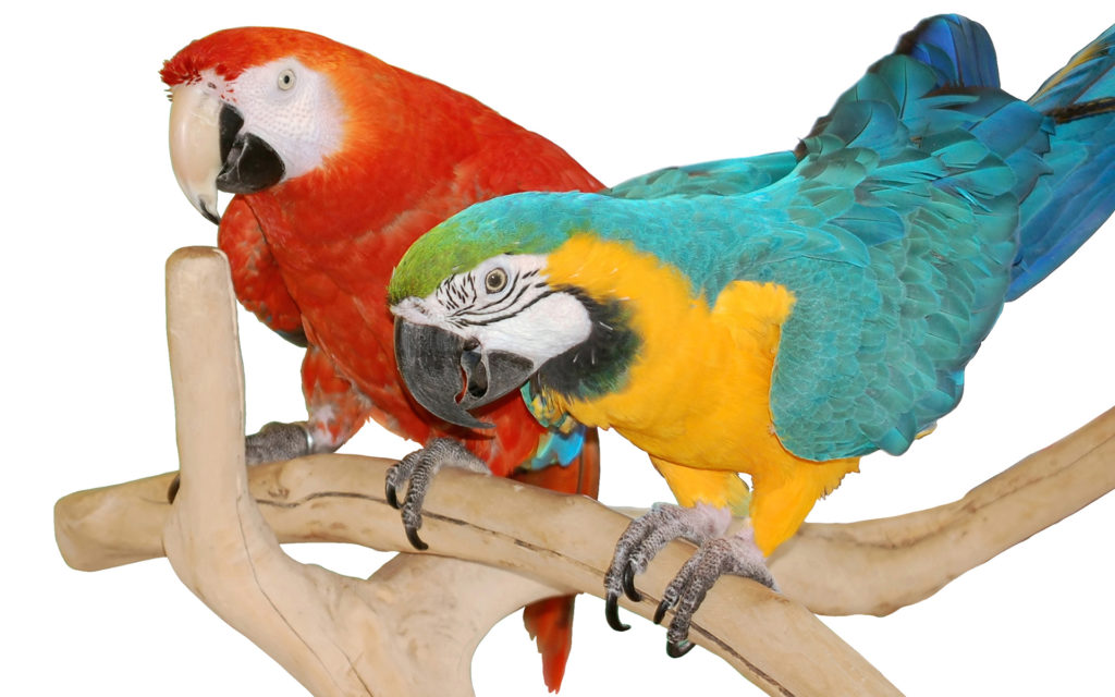 Macaw Widescreen Wallpaper