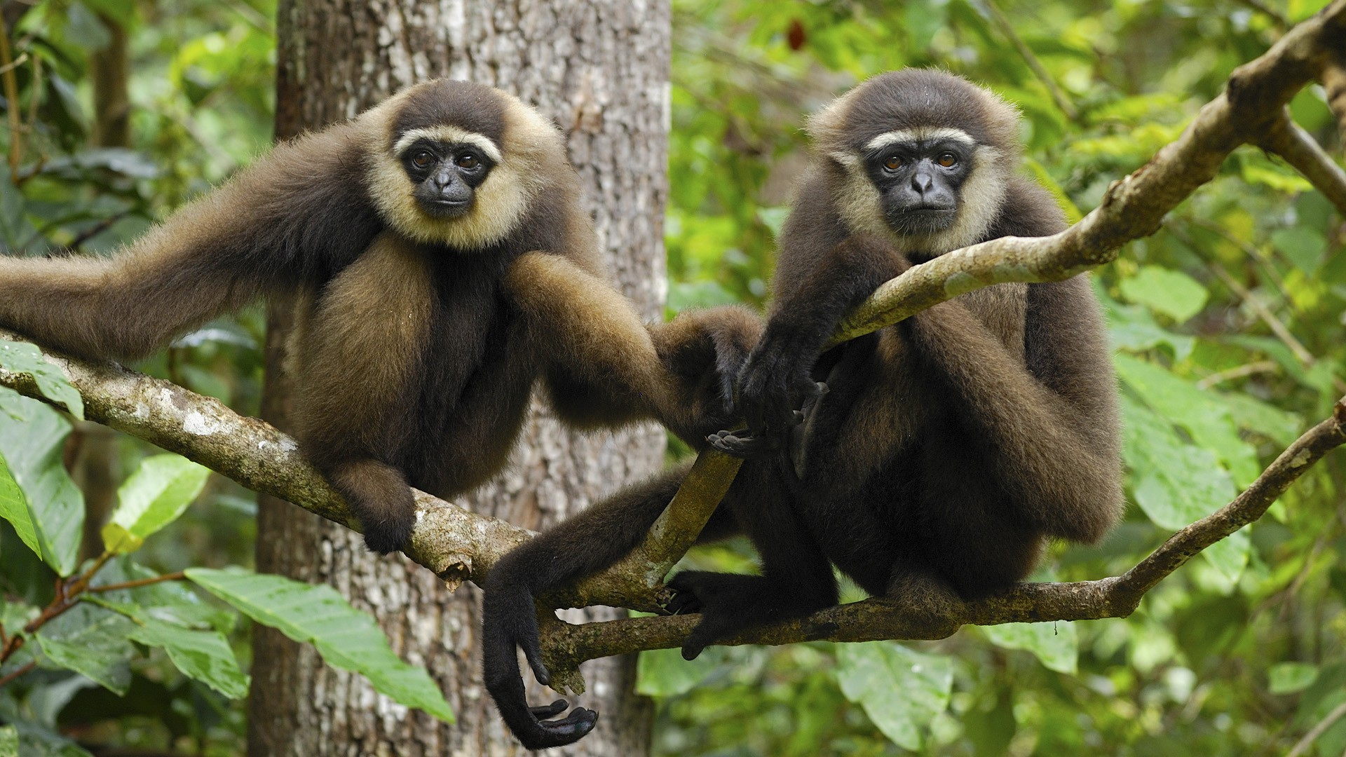 Monkey Wallpapers Pictures Images