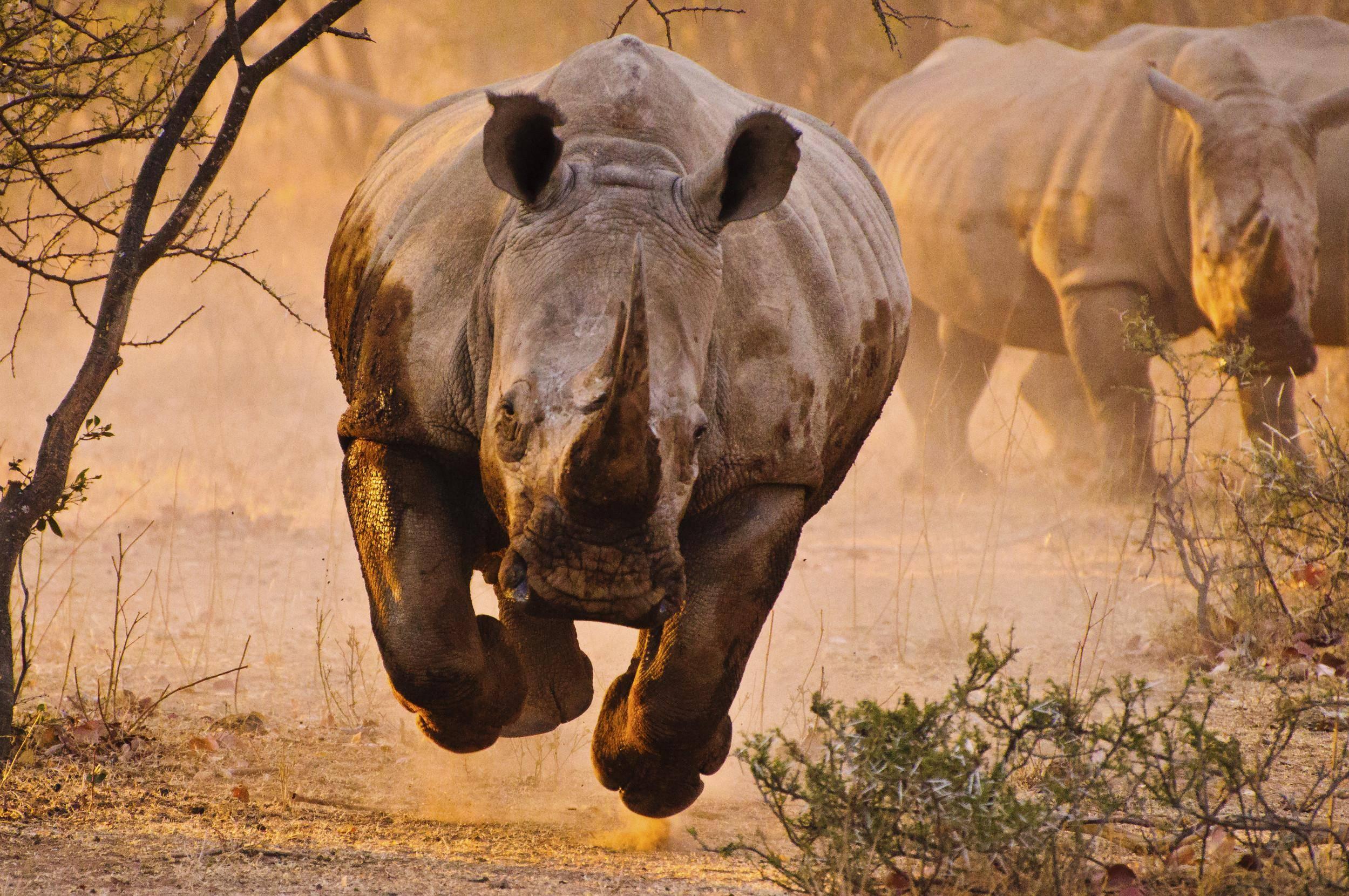 [Image: rhino-18.jpg]