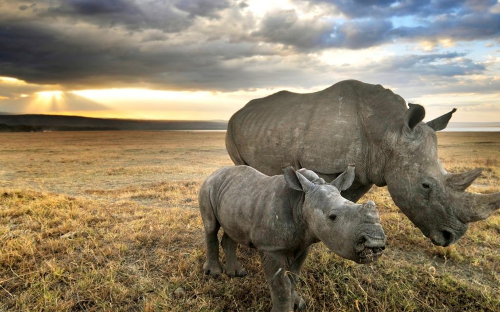 Rhino Widescreen Wallpaper 1920x1200