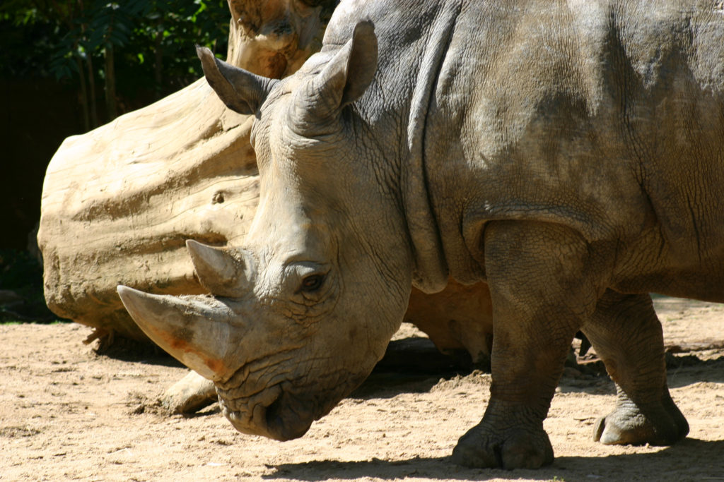 Rhino Wallpaper 2600x1733