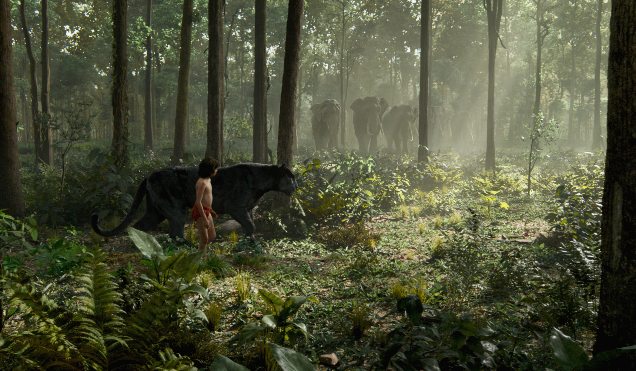 the jungle book (2016) wallpapers, pictures, images