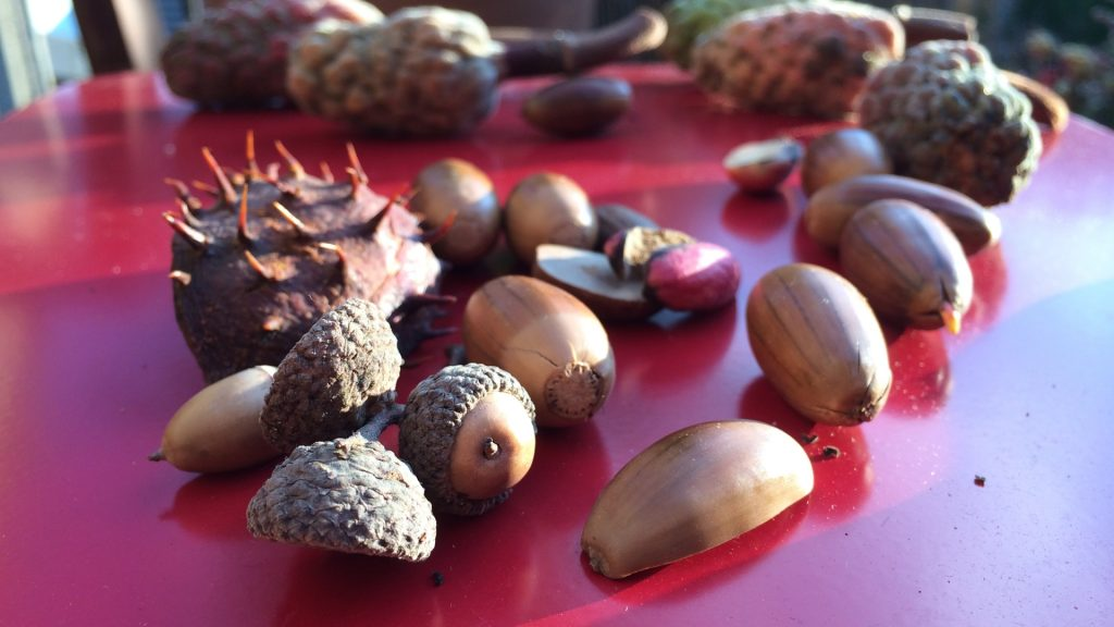 Acorn Full HD Wallpaper