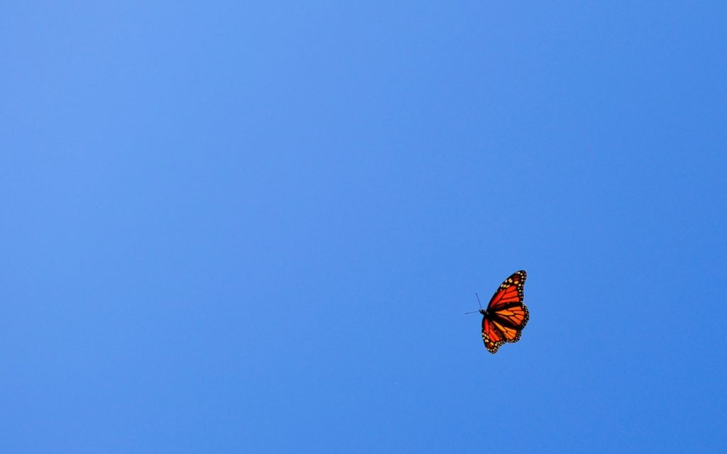 Butterfly Widescreen Background