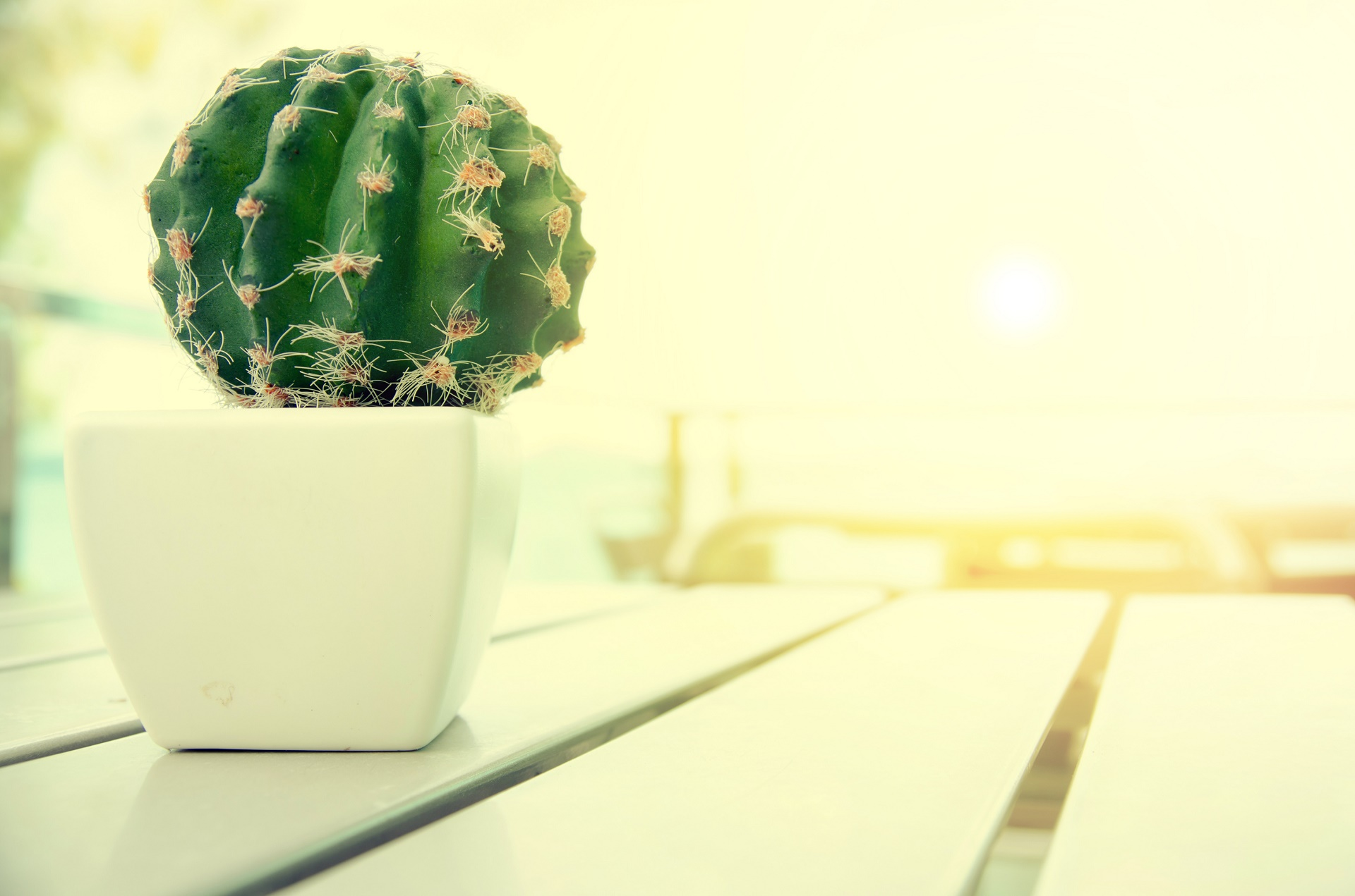 hd cactus wallpapers - photo #10