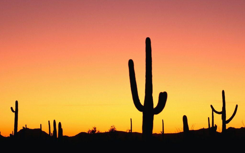 Cactus Widescreen Wallpaper