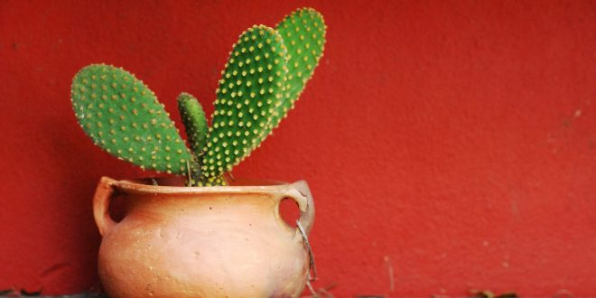 Cactus Wallpapers