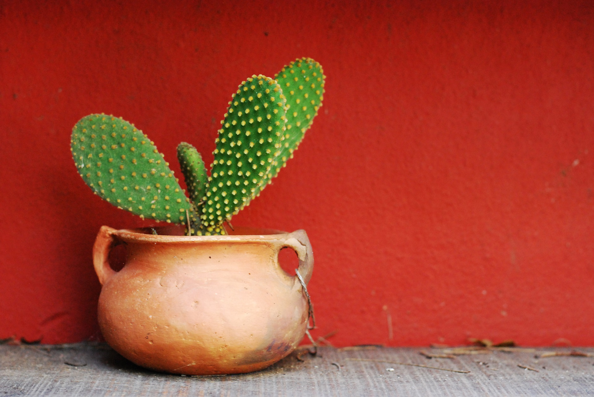 Cactus Wallpapers, Pictures, Images