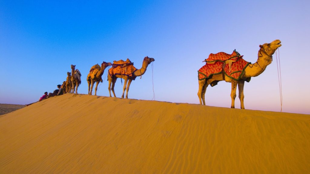 Camel Full HD Wallpaper