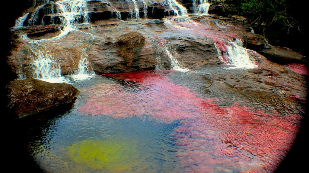 Caño Cristales Full HD Wallpaper