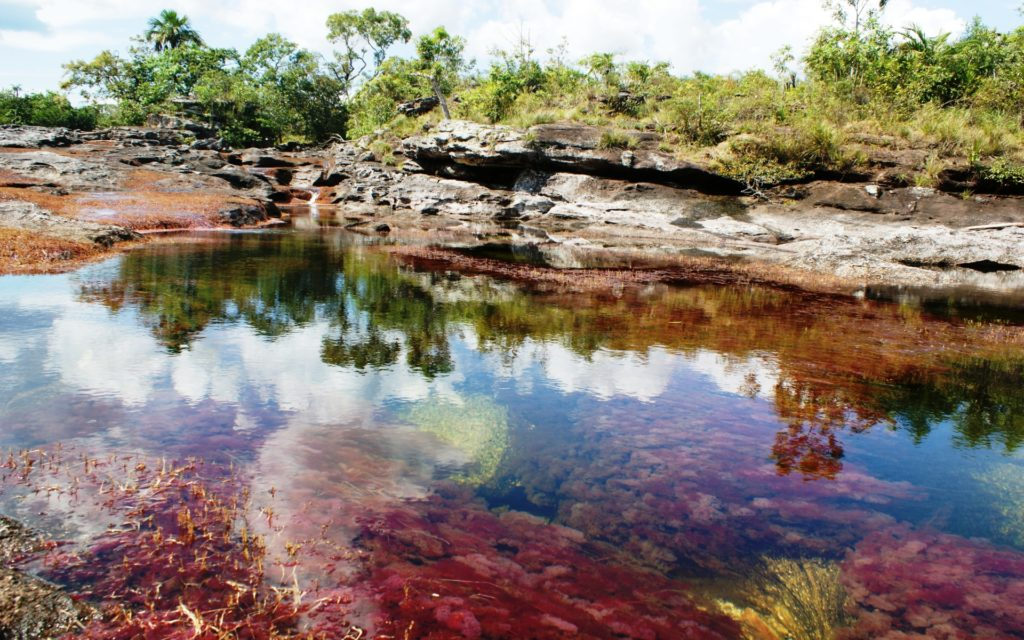 Caño Cristales Widescreen Wallpaper