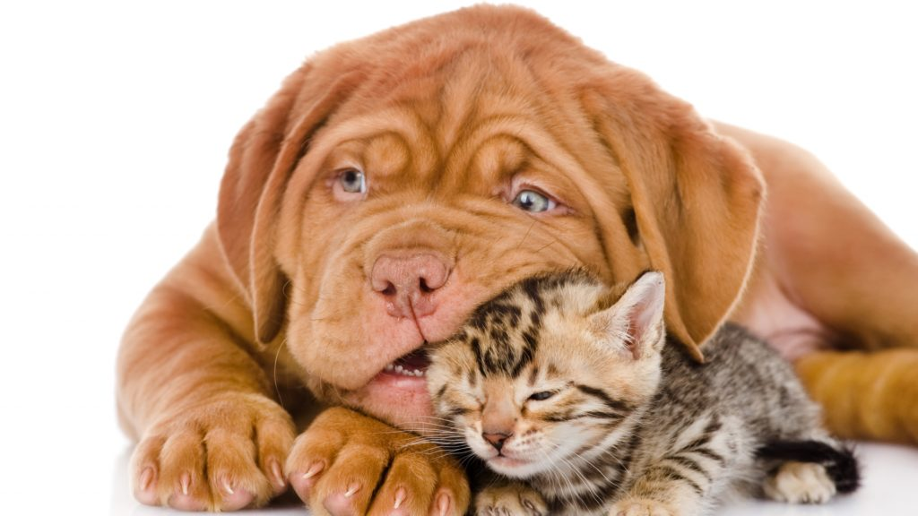 Cat & Dog Full HD Wallpaper