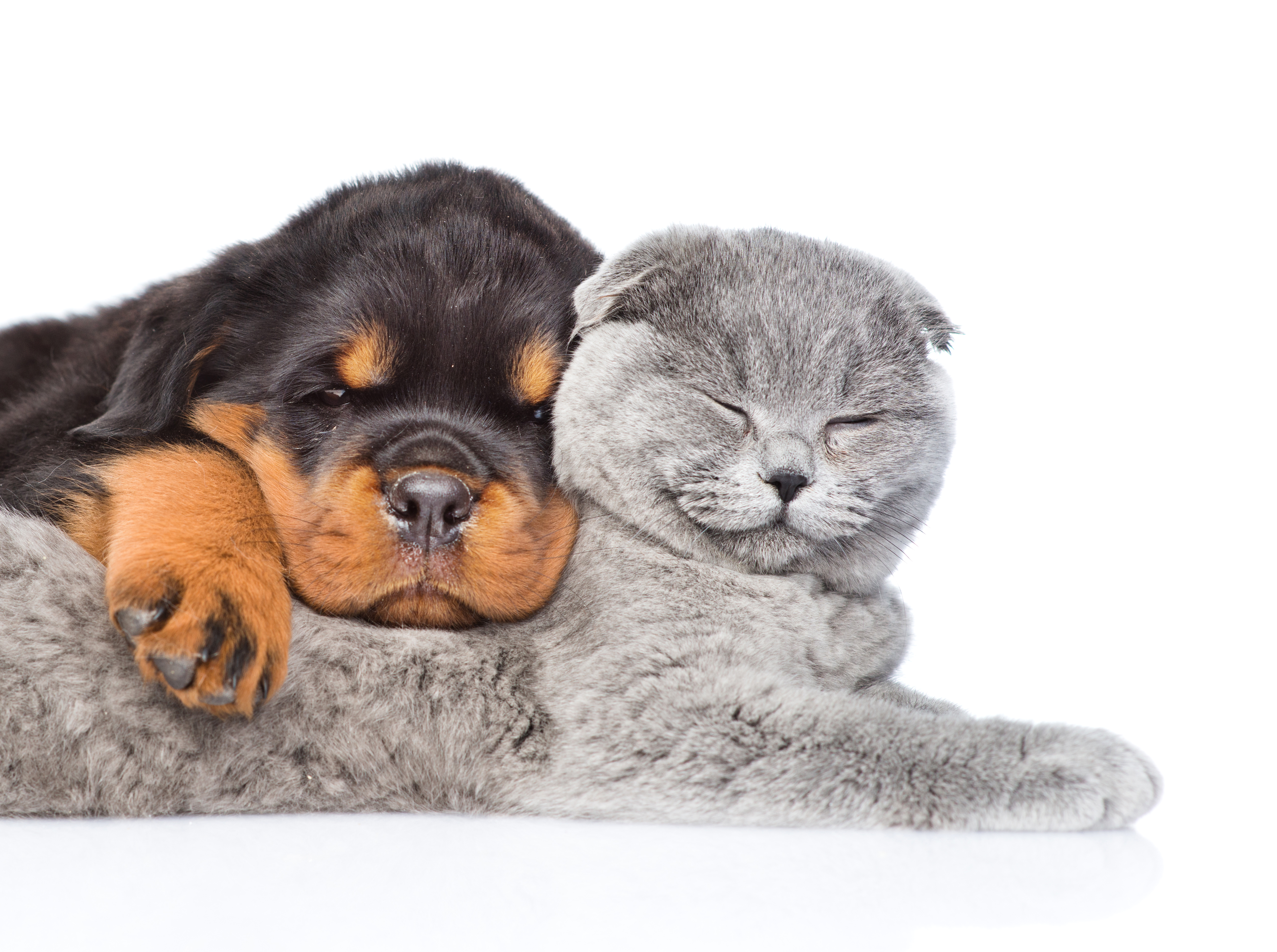 Cute Puppies And Kittens Wallpaper: Cat & Dog Wallpapers, Pictures, Images