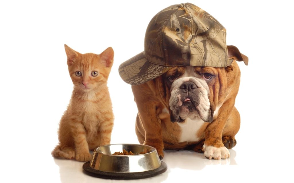Cat & Dog Widescreen Wallpaper