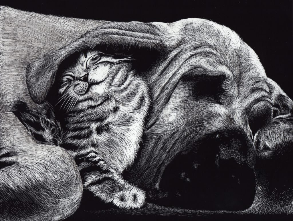 Cat & Dog Wallpaper