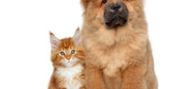 Cat & Dog Wallpapers