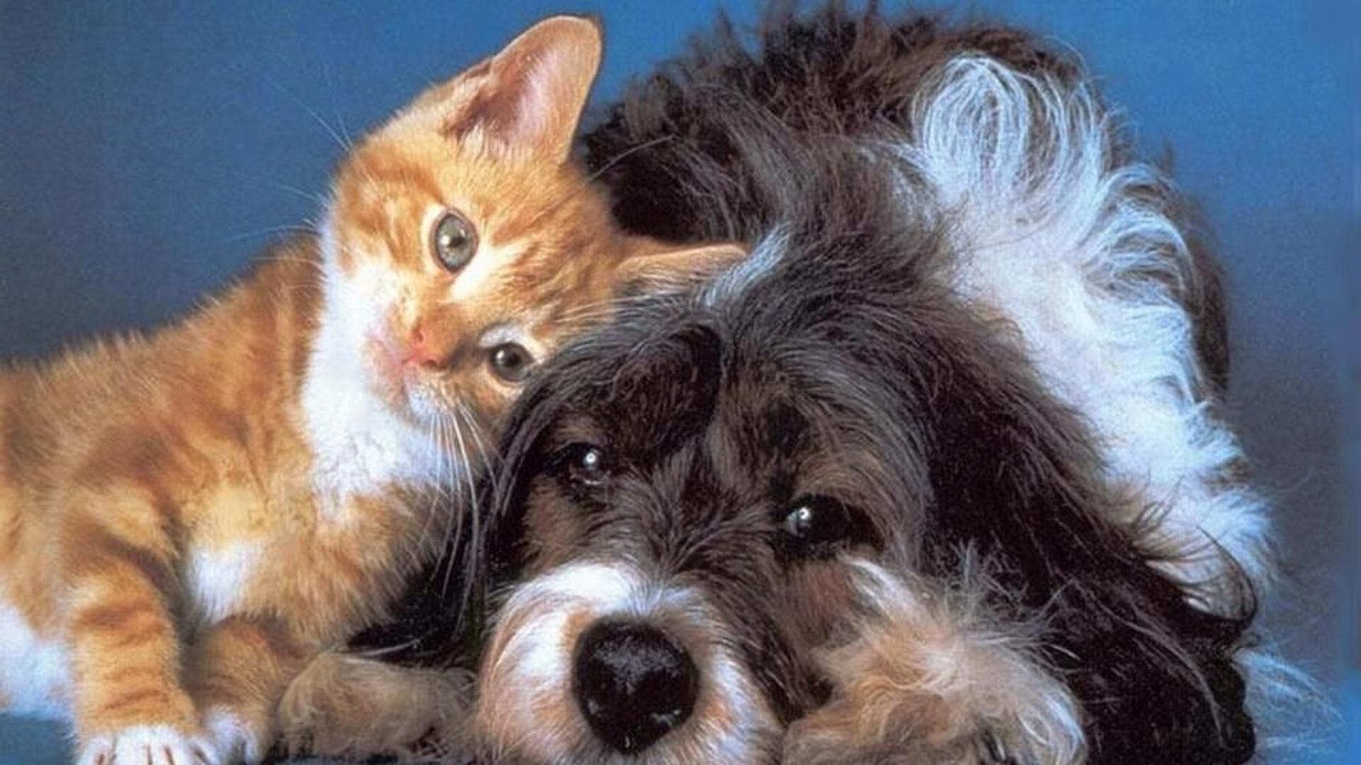 cat & dog wallpapers, pictures, images