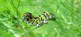 Caterpillar Wallpapers