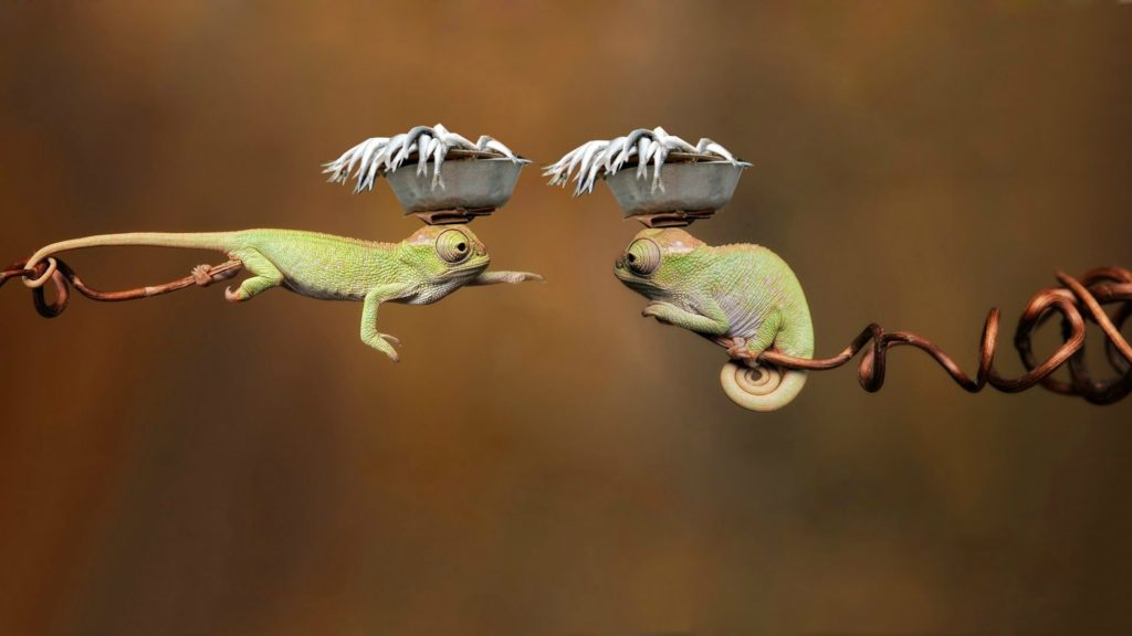 Chameleon Full HD Wallpaper