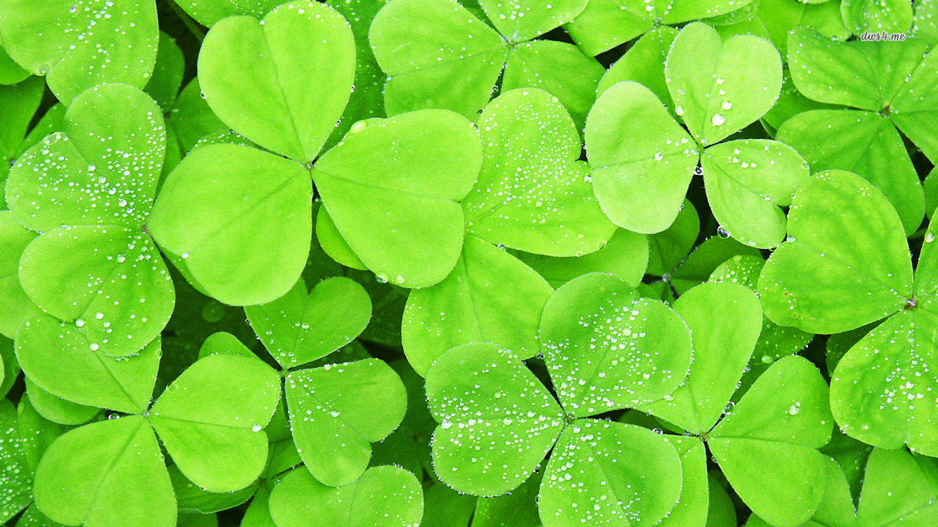Clover Wallpapers, Pictures, Images