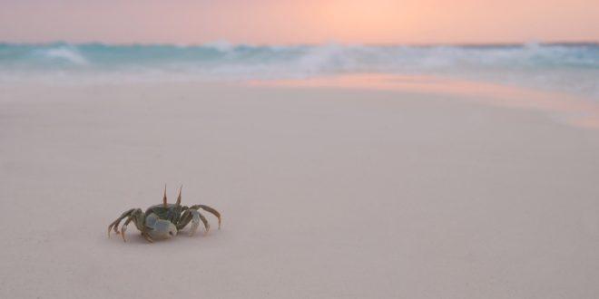 Crab Wallpapers