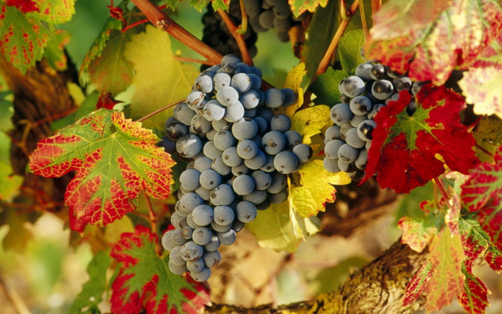 Grapes Widescreen Wallpaper