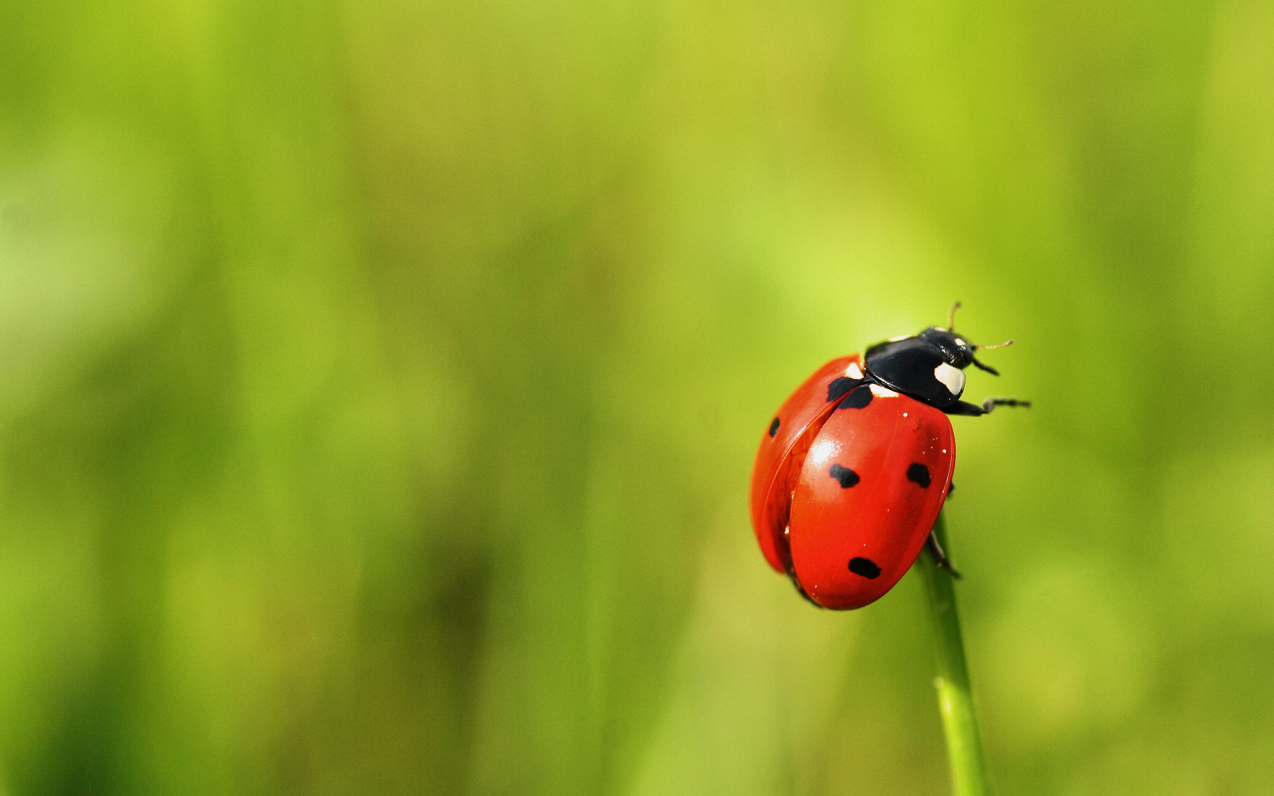 Ladybug Wallpapers, Pictures, Images