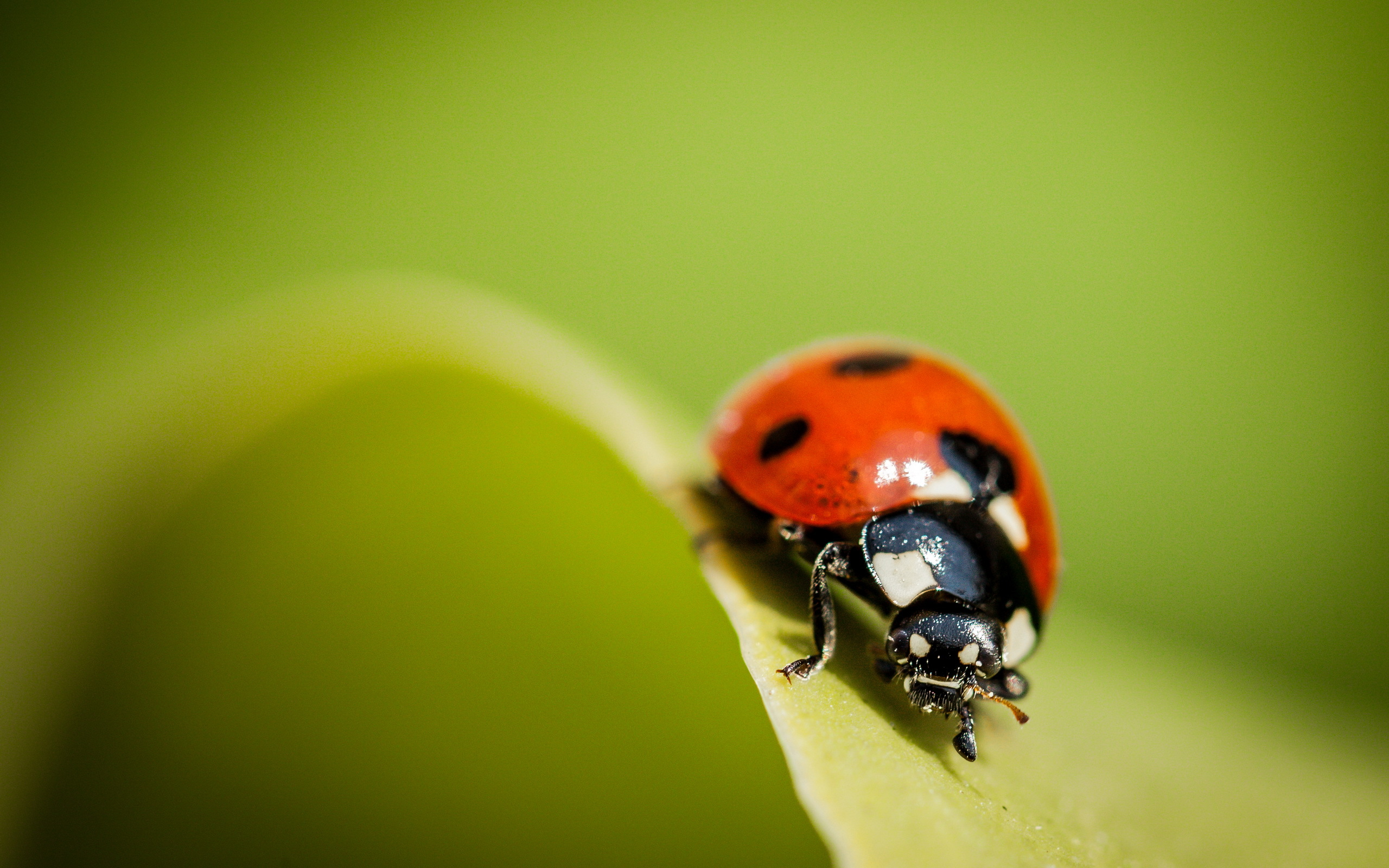 Ladybug Wallpapers Pictures Images