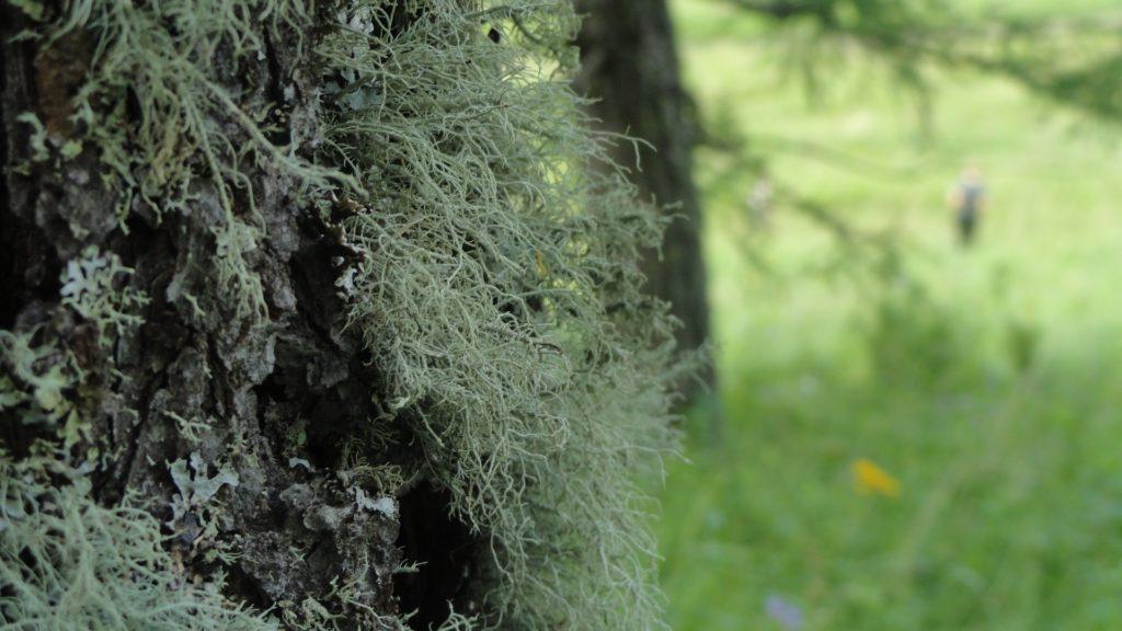 Moss Full HD Wallpaper