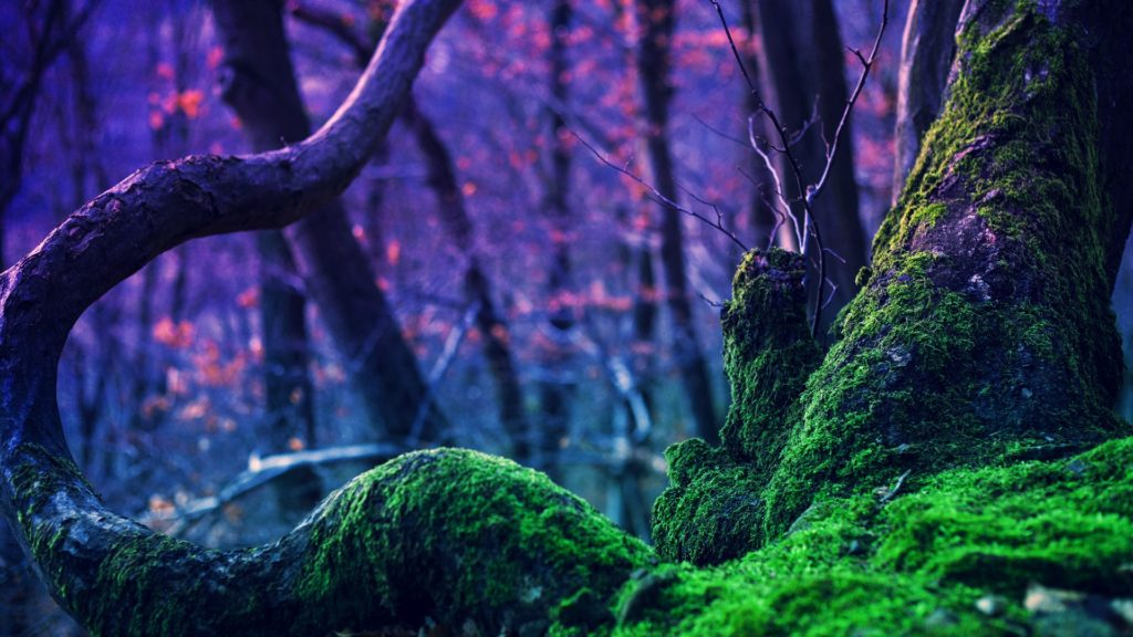 Moss Full HD Wallpaper