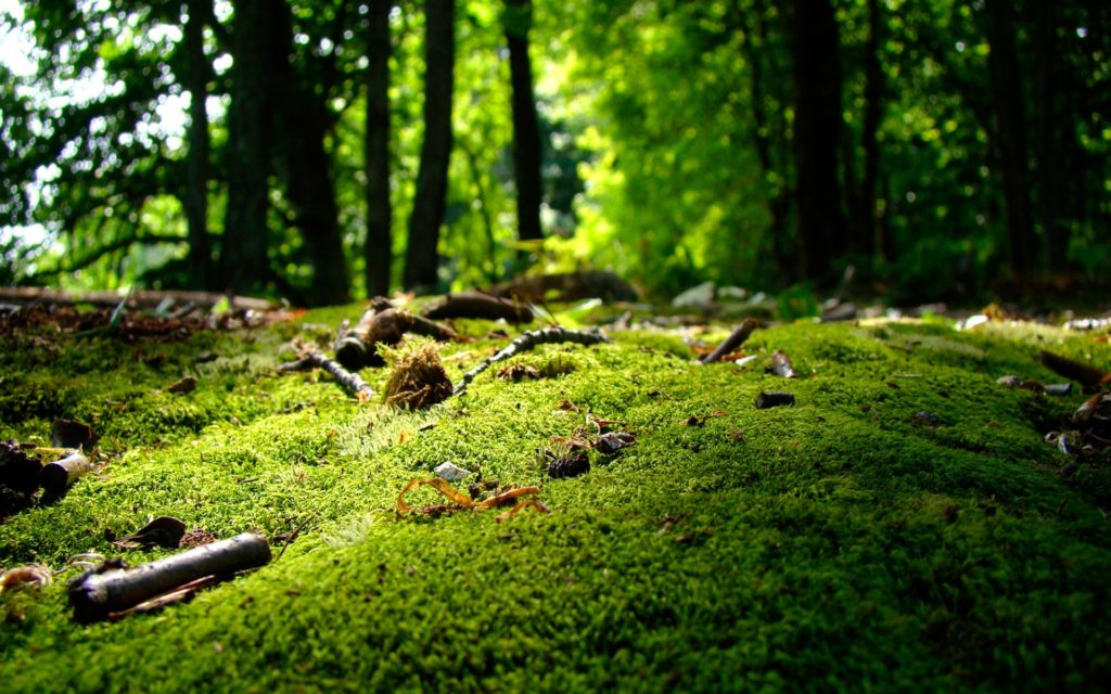 Moss Widescreen Wallpaper