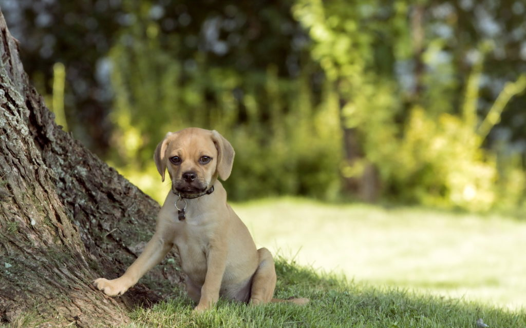 Puppy Widescreen Wallpaper