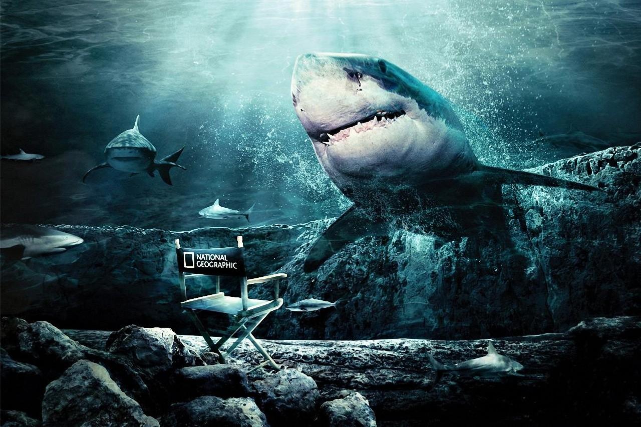 Great White Shark HD desktop wallpaper Widescreen High