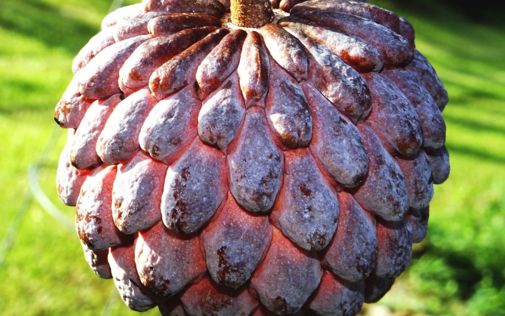 Sugar Apple Widescreen Wallpaper