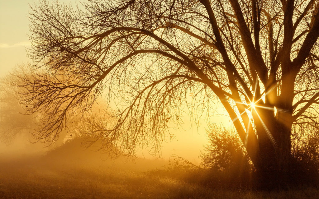 Sunbeam Widescreen Wallpaper
