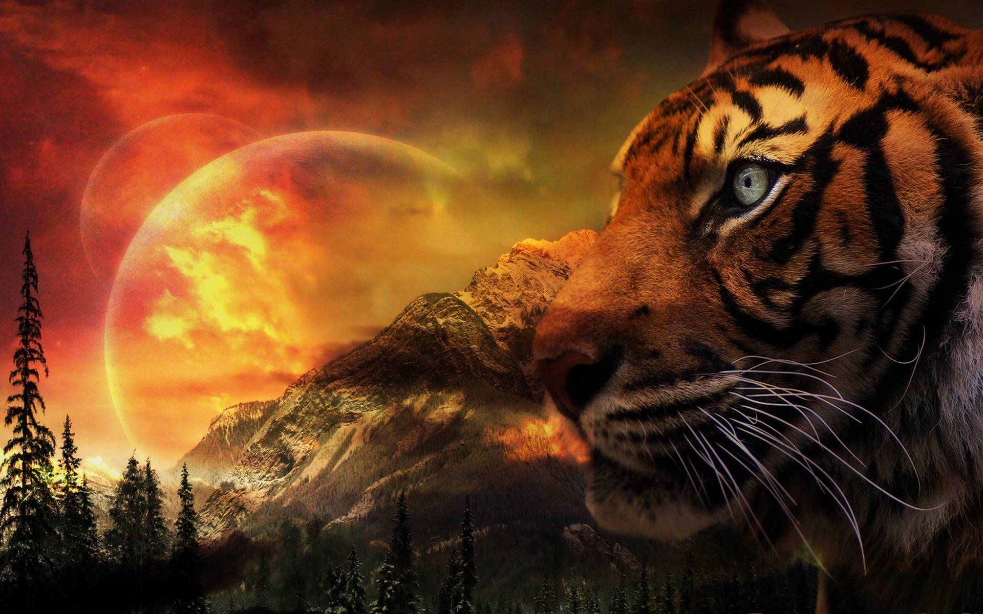 Wonderful Wallpaper Fire Tiger   Tiger 1 Graphic_40853